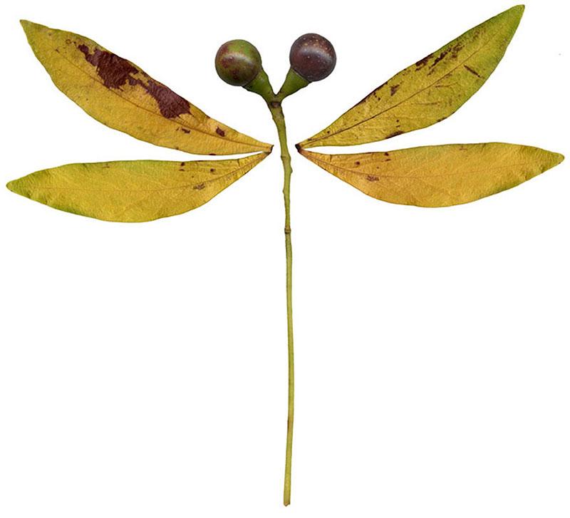 動物・植物イラスト 自然素材・トンボ