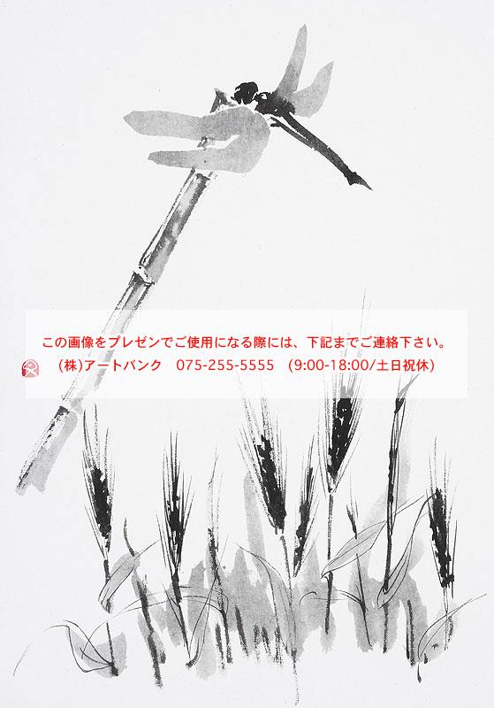 Tombo Dragonfly