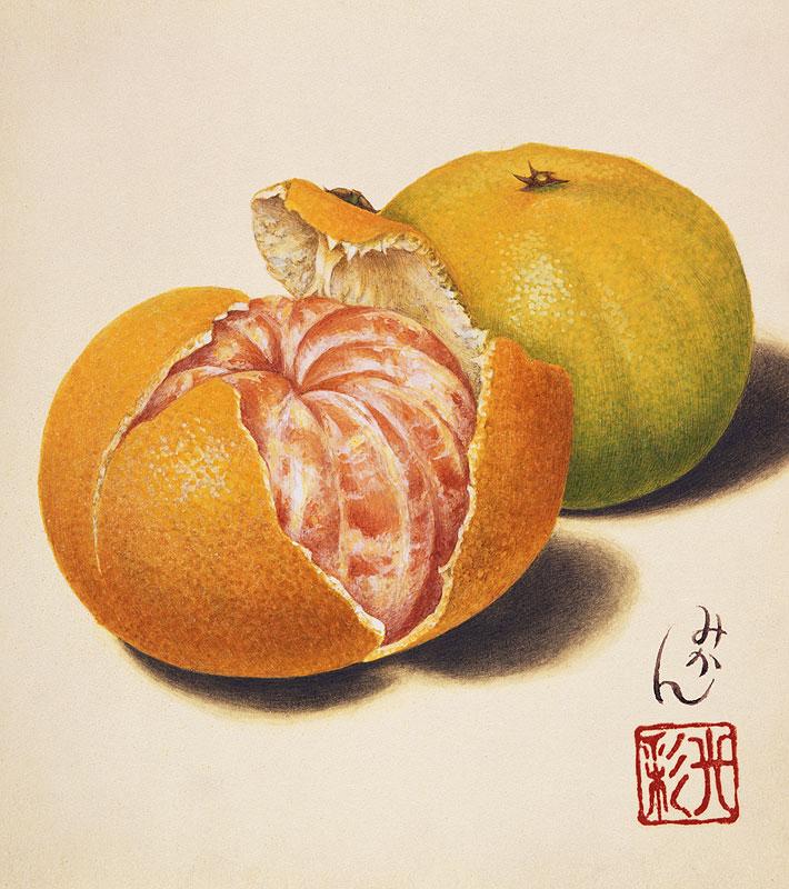 武内光彩 ミカンの絵 スーパーリアルイラスト