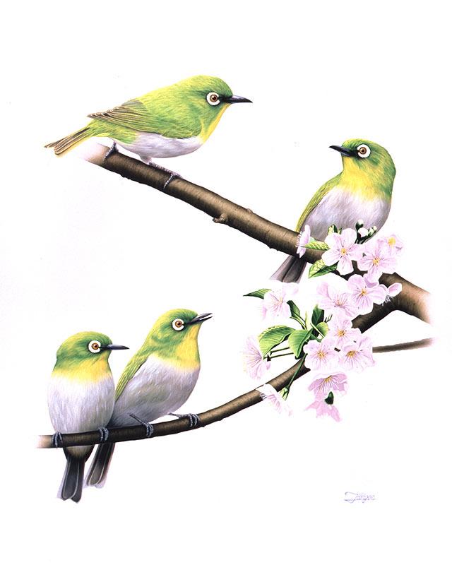 鳥越靖博 桜の花咲く木の枝にとまるメジロイラスト