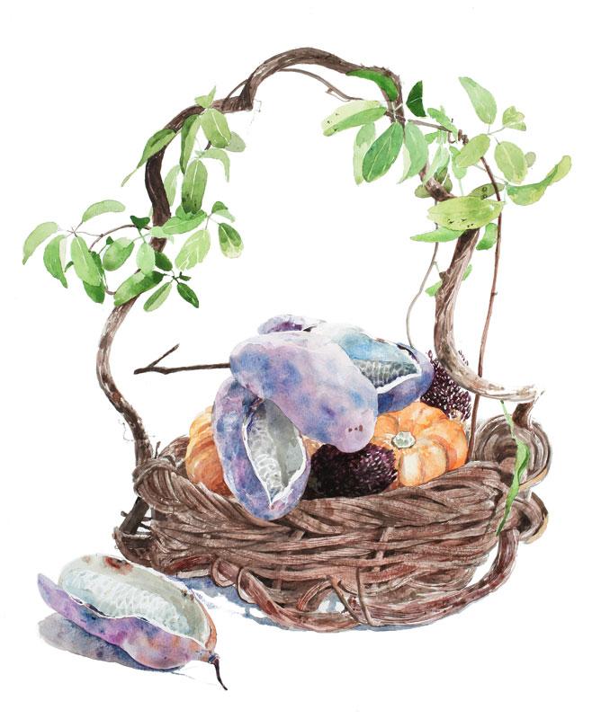 植物イラスト 籠に盛られた山で採れたあけびや、カボチャ