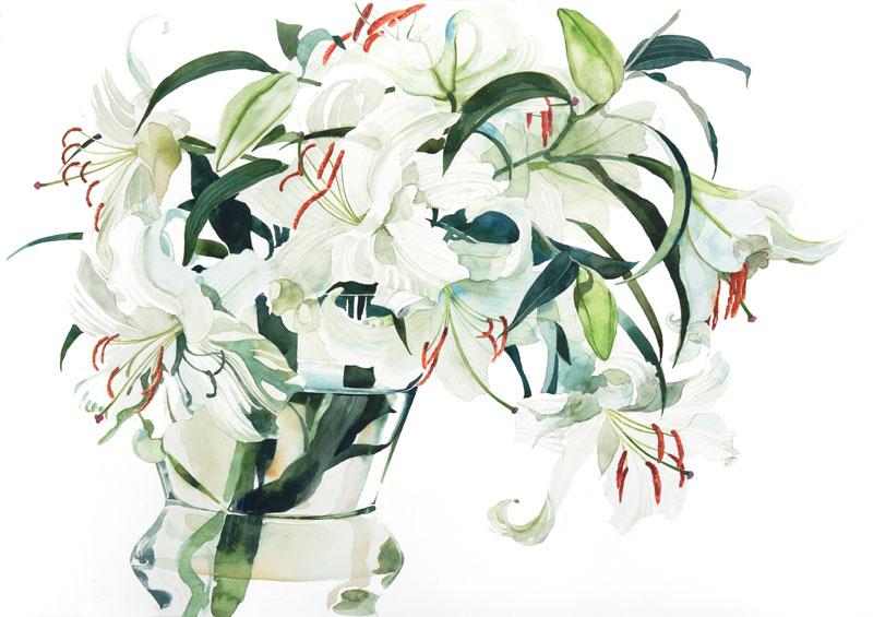 カサブランカ (植物)の画像 p1_7