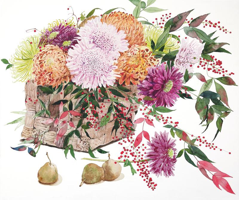 植物・花イラスト 色どりどりの菊と南天、ラフランス