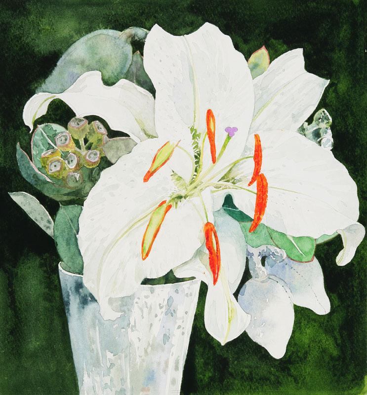 カサブランカ (植物)の画像 p1_2