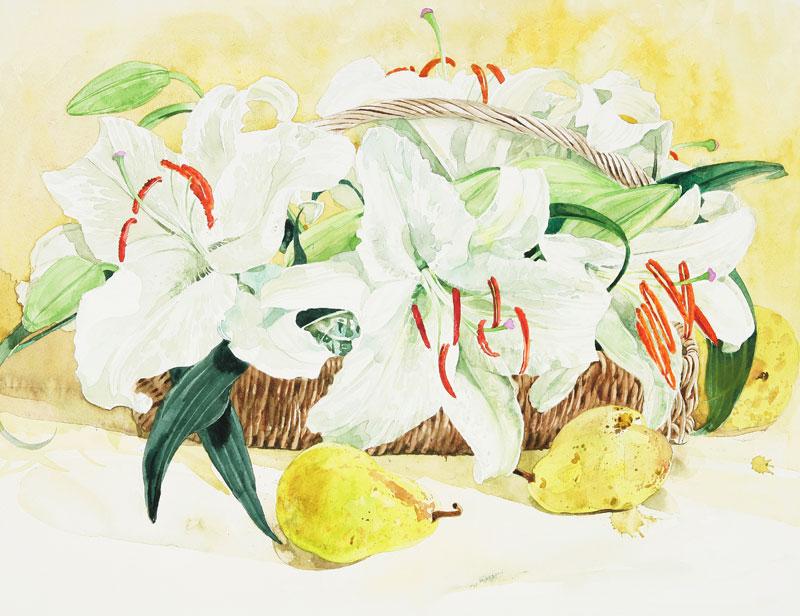 カサブランカ (植物)の画像 p1_32